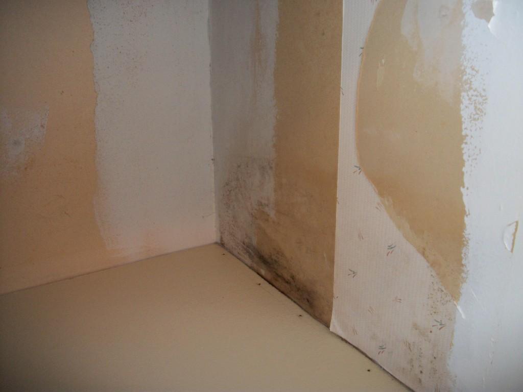 Mold Coming Through Drywall
