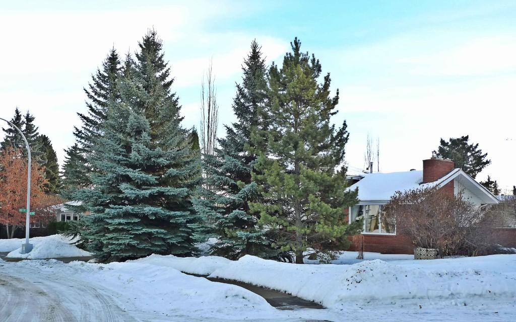 Grandview-Heights,-Edmonton-Neighbourhood-Profile-Photo